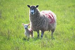 36655 (benbobjr) Tags: nottingham nottinghamshire midlands eastmidlands england uk unitedkingdom retford bassetlaw clayworth clavord doomsdaybook cloworth village heinrichmutschmann