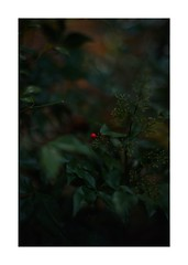 This work is 5/18 works taken on 2019/12/15 (shin ikegami) Tags: sony ilce7m2 a7ii sonycamera 50mm lomography lomoartlens newjupiter3 tokyo 単焦点 iso800 ndfilter light shadow 自然 nature naturephotography 玉ボケ bokeh depthoffield art artphotography japan earth asia portrait portraitphotography