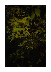This work is 6/18 works taken on 2019/12/15 (shin ikegami) Tags: sony ilce7m2 a7ii sonycamera 50mm lomography lomoartlens newjupiter3 tokyo 単焦点 iso800 ndfilter light shadow 自然 nature naturephotography 玉ボケ bokeh depthoffield art artphotography japan earth asia portrait portraitphotography