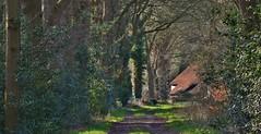 Boskampsbrugweg - Havelte (henkmulder887) Tags: havelte boskampsbrugweg drenthe zwdrenthe bosweg bospad boerderij holland thenetherlands bos januari modder groen bruin natuur wandelen wandeling