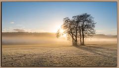 Brume de Janvier (Marek Gorgerat) Tags: brume arbre tranquille nature lever soleil