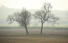 36624 (benbobjr) Tags: nottingham nottinghamshire midlands eastmidlands england uk unitedkingdom retford bassetlaw clayworth clavord doomsdaybook cloworth village heinrichmutschmann