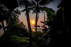 India - Kerala -Alappuzha - Sunrise - 4447 (Peter Goll thx for +14.000.000 views) Tags: hausboot indien systemkamera alappuzha kerala kainakarynorth sunrise sonnenaufgang nikon nikkor india natur nature d850 nikond850 nikkor28300 28300mm
