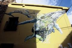 Whale (goodfella2459) Tags: nikonf4 kodakektachrome100 35mm e6 slidefilm analog colour rimini italy mural borgosangiuliano building streetart whale manilovefilm