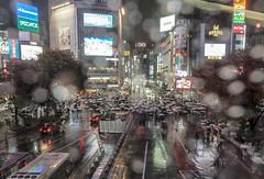 Intersection covered by umbrellas (sapphire_rouge) Tags: rain 渋谷スクランブルスクエア shibuyascramblesquare nightview 渋谷 shibuya tokyo