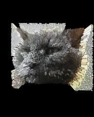 Extruded Bonkers (Greek) (sjrankin) Tags: 18january2020 edited processed 3d extruded test output closeup animal cat bonkers kitahiroshima hokkaido japan
