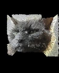 Extruded Bonkers (Cyrillic) (sjrankin) Tags: 18january2020 edited processed 3d extruded test output closeup animal cat bonkers kitahiroshima hokkaido japan