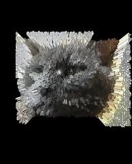 Extruded Bonkers (Latin) (sjrankin) Tags: 18january2020 edited processed 3d extruded test output closeup animal cat bonkers kitahiroshima hokkaido japan