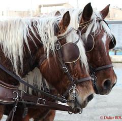 couple de chevaux_martigues-1 (degun67) Tags: martigues bouches rhone provence ruelle sud canal eau eglise pont bateau ciel bleu nuage chevaux