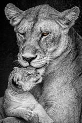 brown eyes blue (PhilHydePhotos) Tags: africa feline lioncub mammals mvuli safari seasonofsmallrains serengeti tanzania wildlife cats lion predator