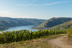 Rheinsteig (JBsLightAndShadow) Tags: rüdesheim lorch hessen hesse deutschland germany rheinsteig rhein rhine rhineriver rhinetrail herbst autumn fall wandern hiking hike outdoors nikon nikond750 d750 tamron tamronsp2470mmf28divcusd wein reben weinrebe weinreben vine vines vineyard