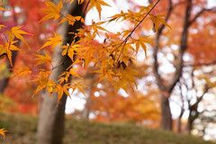 Tonogayato Gardens 6 (Errai 21) Tags: 殿ヶ谷戸庭園の紅葉 東京 autumn leaves landscape landscapephoto 風景写真 photography 写真好きな人と繋がりたい 写真撮ってる人と繋がりたいtonogayato gardens 6