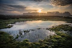 Wreath (Ingeborg Ruyken) Tags: ochtend morning november sunrise dawn 500pxs natuurfotografie kanaalpark fall empel autumn