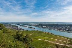 Über Rüdesheim am Rhein (JBsLightAndShadow) Tags: rüdesheim lorch hessen hesse deutschland germany rheinsteig rhein rhine rhineriver rhinetrail herbst autumn fall wandern hiking hike outdoors nikon nikond750 d750 tamron tamronsp2470mmf28divcusd wein reben weinrebe weinreben vine vines vineyard