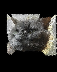 Extruded Bonkers (Punctuation) (sjrankin) Tags: 18january2020 edited processed 3d extruded test output closeup animal cat bonkers kitahiroshima hokkaido japan