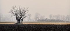 A foggy afternoon (ramerk_de) Tags: fog tree danube hoarfrost upperpalatine oberpfalz nebel donautal ratisbone baum