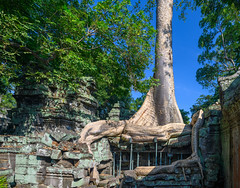 Ta Prohm (SAK Travels) Tags: ankgor architecture asia cambodia iconic palace taprohm siemreapdistrict siemreapprovince