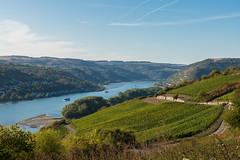 Über dem Rhein (JBsLightAndShadow) Tags: blau rüdesheim lorch hessen hesse deutschland germany rheinsteig rhein rhine rhineriver rhinetrail herbst autumn fall wandern hiking hike outdoors nikon nikond750 d750 tamron tamronsp2470mmf28divcusd wein reben weinrebe weinreben vine vines vineyard