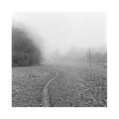 Path (nenahuak) Tags: path meadow landscape trees mist autocord fomapan rodinal