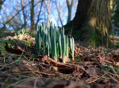 spring (metamodule) Tags: shoots springtime foveon