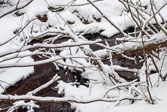 Abbey Gardens, Dysart et al, Ontario, Canada (Tiphaine Rolland) Tags: ontario canada dysartetal haliburtoncounty haliburton haliburtonhighlands highlands algonquinhighlands algonquin winter hiver 2019 nikond3000 nikon d3000 snow neige abbeygardens farm ferme greenlake forest forêt white blanc river rivière eau water bois wood
