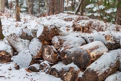 Green Lake, Dysart et al, Ontario, Canada (Tiphaine Rolland) Tags: ontario canada dysartetal haliburtoncounty haliburton haliburtonhighlands highlands algonquinhighlands algonquin winter hiver 2019 nikond3000 nikon d3000 snow neige white blanc bûche log bois wood greenlake tree arbre