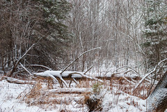 Green Lake, Dysart et al, Ontario, Canada (Tiphaine Rolland) Tags: ontario canada dysartetal haliburtoncounty haliburton haliburtonhighlands highlands algonquinhighlands algonquin winter hiver 2019 nikond3000 nikon d3000 snow neige white blanc bois wood forest forêt greenlake tree arbre