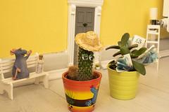 "Nature in the Home! (me.behindthelens) Tags: plants catus indoorplants moneytree natureinthehome smileonsaturday ""getnatureinyourhome"""