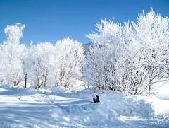 De witte wereld (Marcel Nihot) Tags: marcelnihot stjohannit oostenrijk winter wittewereld