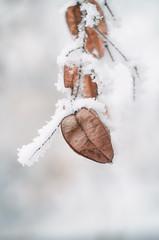 e-lias-ICC_9198-Edit (e-lias hun) Tags: winter frost frozen tree seeds wintercolor helios helios44m4 nikon d7000 elias dslr hungary vintagelens