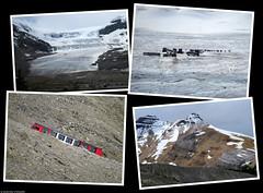 20180615_06 Athabasca Glacier in Jasper National Park, Alberta, Canada (ratexla (protected by Pixsy)) Tags: ratexlasalaskatrip2018 ratexlasgreentortoisetrip2018 greentortoise alaskaexpedition 15jun2018 2018 canonpowershotsx50hs travel travelling traveling journey epic photophotospicturepicturesimageimagesfotofotonbildbilder vacation holiday semester backpacking wanderlust resaresor cool summer sommar northamerica nordamerika earth tellus ontheroad roadtrip jaspernationalpark banffnp alberta canada kanada athabascaglacier landscape landskap scenery scenic mountain mountains berg beautiful nature homosapiens people person human humans life organism tetraptych polyptych glacier glaciär ice is canadianrockies rockymountains thecanadianrockies therockymountains therockies