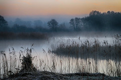 (OutdoorMonkey) Tags: hamwall avalonmarshes dawn morning earlymorning water lake reed reeds nature natural scenic scenery outside outdoor rural countryside nationalnaturereserve nnr waltonheath ashcott