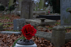 (DesiréeG,) Tags: birbeck cementery rose red london woods south