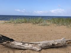 Saulkrasti (ilamya) Tags: latvia saulkrasti beach sea balticsea grass log gulfofriga