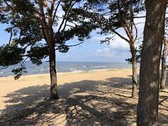 Saulkrasti (ilamya) Tags: latvia saulkrasti beach sea balticsea trees gulfofriga
