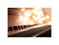 Firefly suite (G. Postlethwaite esq.) Tags: dof macro unlimitedphotos bokeh closeup depthoffield keys photoborder piano selectivefocus stilllife