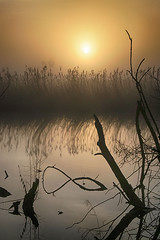 (OutdoorMonkey) Tags: sunrise sunshine sun mist fog waltonheath avalonmarshes hamwall nationalnaturereserve rspb outside outdoor rural nature natural scenic scenery countryside somerset reflection reed reeds branches