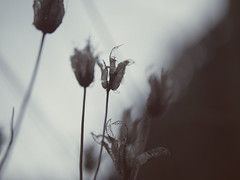 Future (J.C. Moyer) Tags: rustic rustiek holland thenetherlands volendam edam lumix025 lumixgx80 hh025 dmcgx80 panasonic lumix future flora natuurfotografienoir naturephotographynoir natuurfotografie naturephotography plant