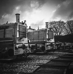 Stored Trains in Yard (Ric Evers) Tags: gelderland veluwsestoomtrein blackandwhite rolleiflex35 foma100 dieseltrain lieren