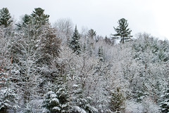 Haliburton, Ontario, Canada (Tiphaine Rolland) Tags: ontario canada dysartetal haliburtoncounty haliburton haliburtonhighlands highlands algonquinhighlands algonquin winter hiver 2019 nikond3000 nikon d3000 snow neige white blanc tree arbre bois wood