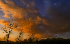 Nature-1095-2 (EB_Creation) Tags: redsky sky sunset tree walkinginnature walking amateur digital camera nikon nikkor nikkor1680mmf284evr d7500 1680284eifedvr nature