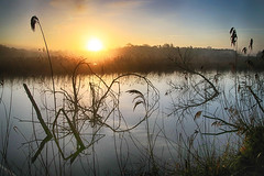 (OutdoorMonkey) Tags: hamwall waltonheath avalonmarshes water lake wetland marsh sunrise dawn morning rural nature natural scenic scenery countryside outside outdoor somerset reed reeds rspb nationalnaturereserve nnr reflection