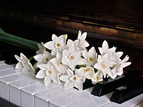 Piano Keys Jonquils Flowers Black Edited 2020