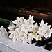 Piano Keys Jonquils Flowers Black Edited 2020