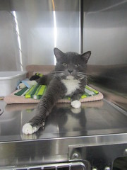 Spencer - 2 year old neutered male