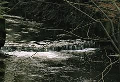 Winter in Glenburn (TomIestyn) Tags: glen stream burn water ireland northernireland belfast dunmurry jubileepark winter