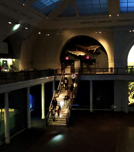 Kids Exploring the Museum at Night