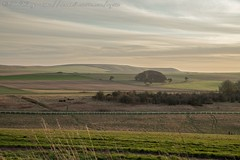 IMG_0509 (del.hickey) Tags: wiltshire landscape white horse