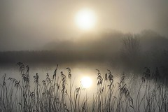 (OutdoorMonkey) Tags: avalonmarshes hamwall nationalnaturereserve mist fog sunshine sunlight outside outdoor rural nature natural scenic scenery countryside reed reeds marsh wetland lake water nnr