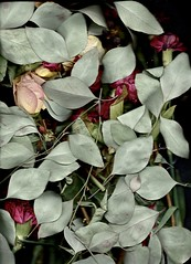 Scanography (Roundy Photo) Tags: flowers plants scanner scan scanography